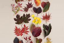 Beautiful fall leaves / Fall colours