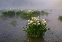 Cahaba River Photos