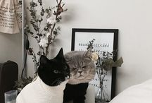 CATikoty / incredible babies