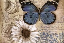 Paper : Butterfly