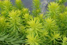 Deborah L Plants