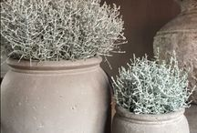 Planten enzo in huis