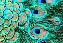 Peacock Colour Palette