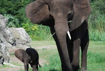 All Things Irrelephant