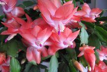 Virág gondozás