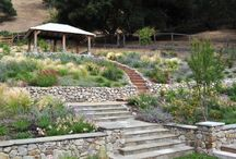 Steep Hillside Landscaping
