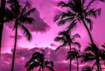 Hawaii / ハワイ Haiwaii 年に1回は行っています。