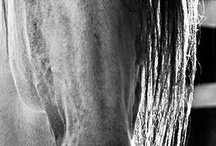 Eye Candy-Horses / by Michele Hodge
