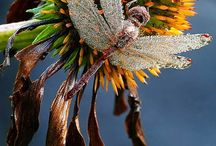 Flora n Fauna / by Aditi Guru