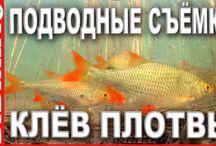 fishung