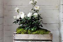 Blommor och annat små mys