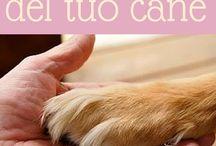 come salvare le zampe del cane