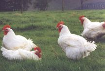 Suppliers / The suppliers of our award winning meat and poultry