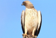 extremadura 2013 / een vogelparadijs in midden-spanje