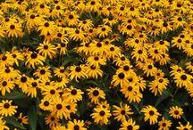 Tuin planten en bloemen