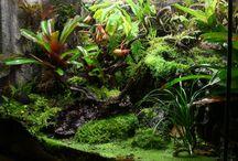 vivarium, terrarium, carnivorous plants