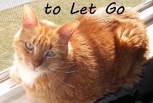 Animal and pet posts. / Posts about pets and animals that are worth reading.