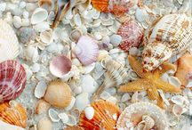 creative shell makes