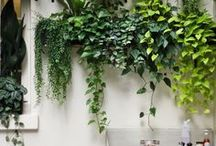 Project wall garden