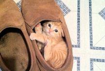 cats / I just love cats.