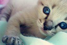 Photography - Animals / #photography #animals #pets / by Thaís Bristot