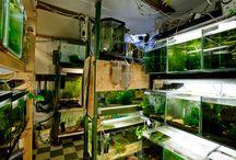 Akvarijní pěstírna