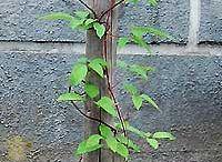 Piha,puutarha ja kasvihuone / Pihanhoito,ideat,kasvit