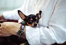 Pets at Work | INTERIORS
