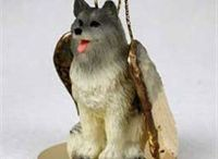 Keeshond / Keeshond dog pictures and gift ideas.