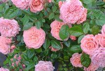 My garden❤ Oma puutarha