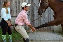 Equine Aromatherapy & Massage / Equine Aromatherapy and massage. Use aromatherapy and massage so you can feel confident your horse is performing to the best of his ability.