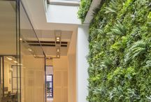 Vertical green wall