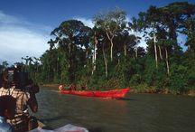 Amazon Jungle / Amazon expedition high