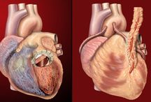 Hole-in Heart Cause Symptoms Treatment