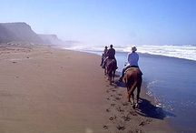Things to do on the Mendocino Coast / Activities near Elk Cove Inn