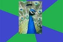 Colorguard <3 / by Cori Abbott