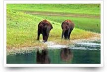 God's own country kerala / Prevalently recognized as God's own country, the state is loaded with innumerable magnetism that wins the heart of all travelers.  http://www.holidaybees.com/kerala-south-india-tours.html