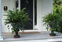 Chandler Ct Porch & Driveway / Ideas for the front of the house landscape