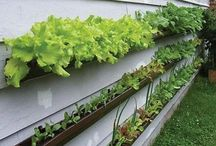 Vegetable Gardens / by Gardening Gals
