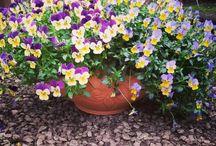 Küp Saksılar / flowerpot