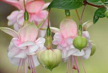Lindas flores / Flores