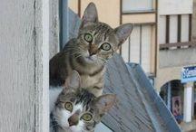 cute photos of animals