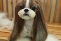 cortes de perro