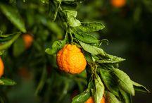 Mandarin Mania