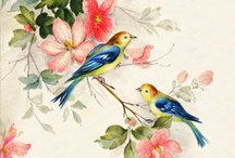 Superb Birds / by faithlovelight