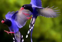 Colorful Birds / by Erma Mohney