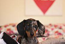 weenie dogs / by Alissa