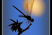 Dragonflies and Dragons