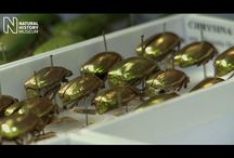 Beautiful Bugs / We share the planet with millions of insects, some dazzling, some interesting, some creepy.