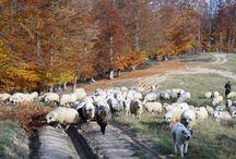 Rumunia Październik 2013 Wyprawa z Actifunem